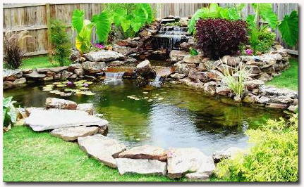 Mario 39 s fish and pet care specializing in salt fresh for Outdoor fish pond care